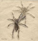 Spider etching