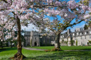 Blossom at Dartington Hall