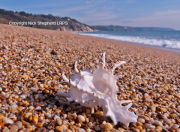 Shell on the seashore