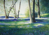 BLUEBELLS ON THE 10TH