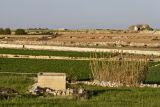 Farmland on  the Maltese south coast