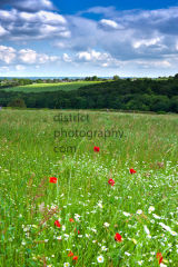 PORTRAIT LANDSCAPE OF SUMMER MEADOW
