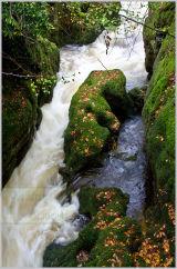 Autumn at Rumbling bridge gorge
