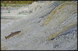 Sea Trout versus Water mountain