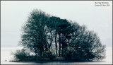Misty Island Tree