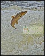 Classic Trout pose (Sea)