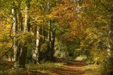 Buckmoorend - autumn on the Ridgeway