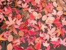 Leaves - floating on a pond