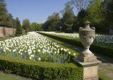 Cliveden - the Long Garden