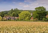 Little Missenden - wheat field