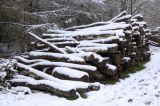 Penn Wood - cut timber under snow