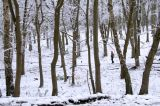 Penn Wood - winter scene