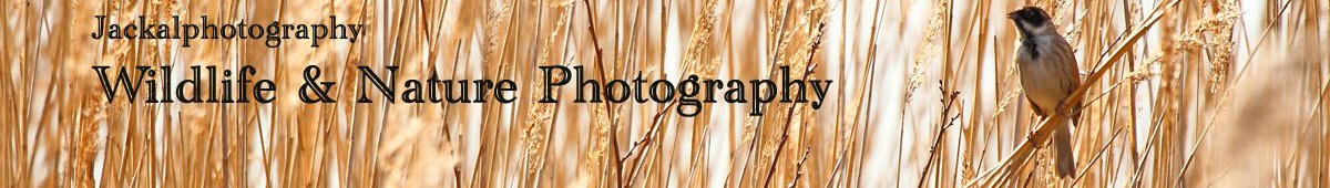 jackalphotography    wildlife & nature photography