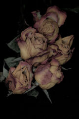 Faded Roses #2