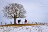 Winter Horses .....