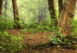 Misty woods....