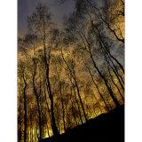 Fire Wood