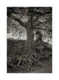 Derwent roots