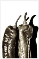 Posing Peppers