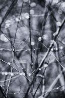 Tree Diamonds