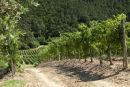 Vine Line