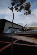 Lone Gum Tree, Canberra