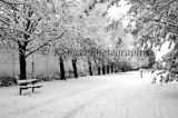 Snowy Wrec Black and White
