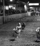 Portsmouth Greyhound Stadium 009