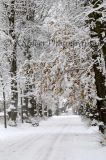 Snowy Kingston Cemetery
