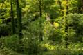 Clapdale Wood