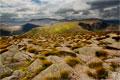The Cairngorm Plateau