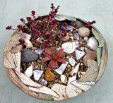 Planted bowl