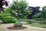 Burnby Hall water garden