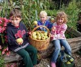 Children gathering apples