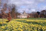 Daffodils at Castle Howard