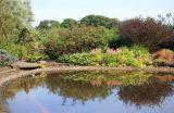 Large pond at Longframlington