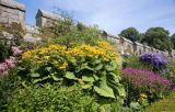 Mixed border at Chillingham Castle