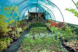 Plants in a nursery