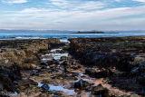 Farne Island Ring