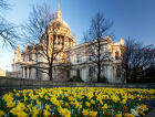 Spring daffodils outside St Paul's