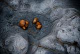 Eype beach abstract