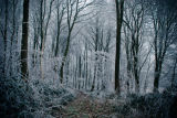 Hoar frost Plashwood