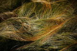 waves of grasses