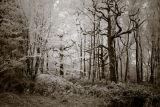 hoar frost trees