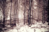 snow Lythe Hangers