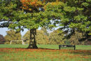 Tree, Bench, Goalpost in Autumn!