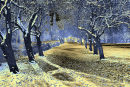 Winter Wonderland (in Blue Solarization)