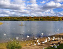 Ruislip Lido In Autumn