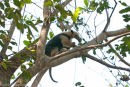 Little ant eater in tree