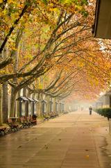 Autumn Walk, Xi'an, China